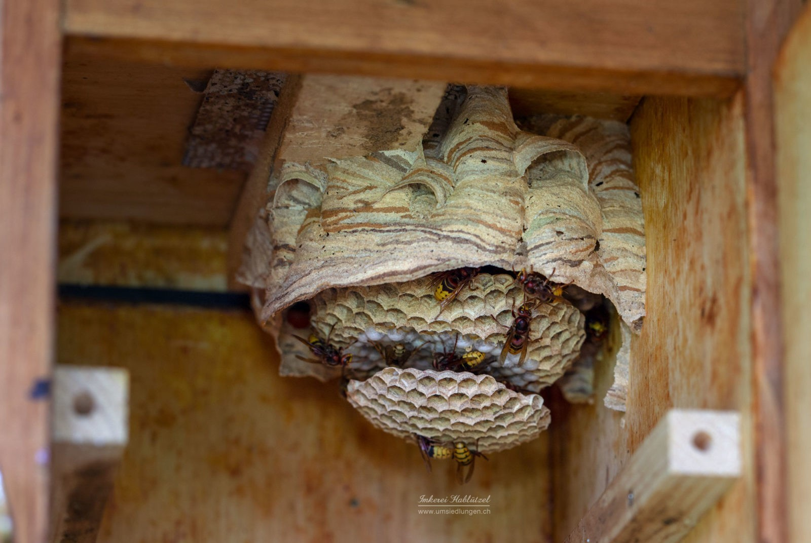Nest Thundorf 100718